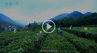 香木海芙蓉山黑茶企业宣传片(5分钟版)